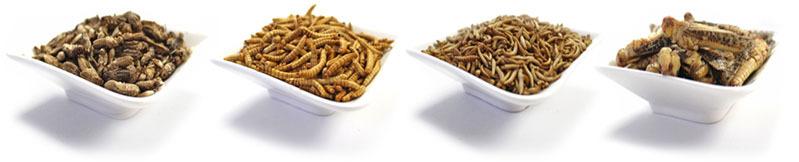 Insekten_zum_Essen_-_Heuschrecken,_Grillen,_Mehlwurmer,_Buffalowurmer